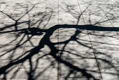 play of shadows 153