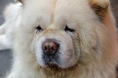 Le chaînon manquant entre le chien, l'ours et la peluche