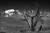 torres_treeframed