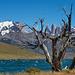 Laguna Azul - Torres del Paine