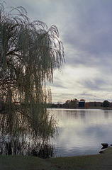 Willow Tree At The Reservoir