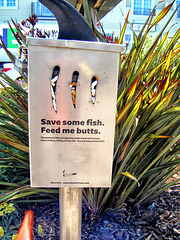 Save Some Fish