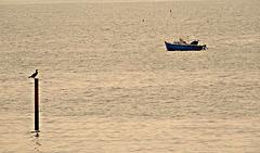 le cormoran et le pêcheur