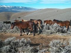Mustangs moseying by--