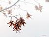 Melancholie im Herbst