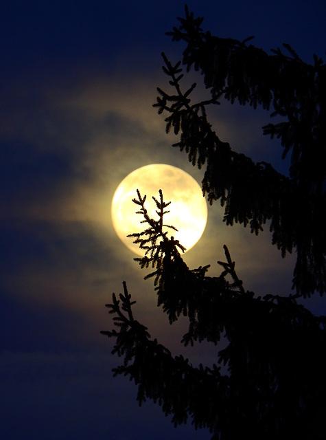 der Aufriss des Abends ;).........PiP