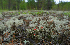 Among the mosses and the lichens - 2