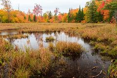 Canada - Gatineau Park