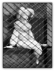Happy Fool Fence (◕‿-)