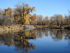 The last of the fall colours at Inglewood Bird Sanctuary