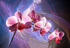 Une branche d'orchidée