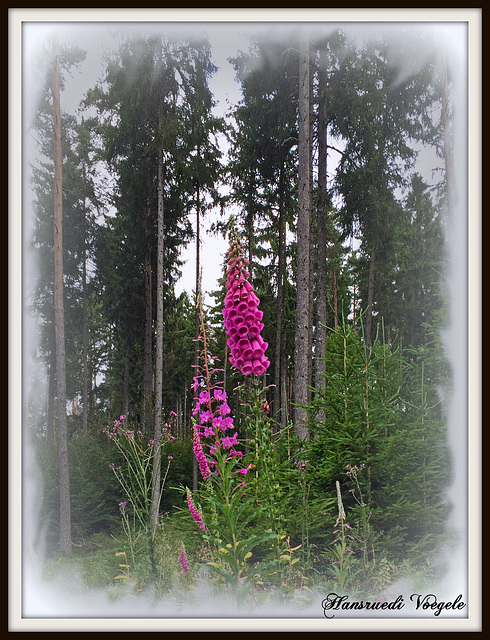 Leuchtende Farben im Wald