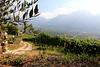 auf dem Kurtatscher Weinwanderweg