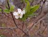 Le printemps explose ...