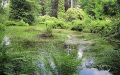 Teich im Bielatal
