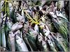 Victoria : il pezzo forte di questo market sono certamente 'i pesci'