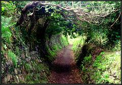 Lane in Cornwall