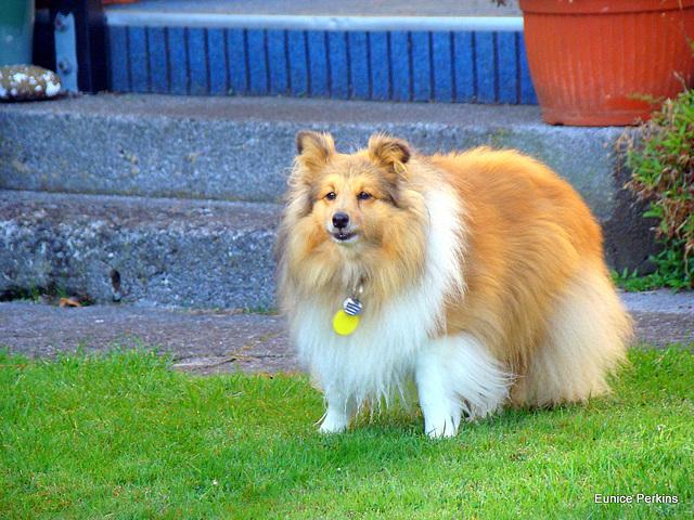 Very Friendly Dog.