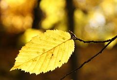 Herbstlicht...