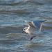 Seagull touchdown