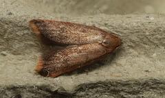 Moth IMG 6459-1