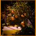 Naranjas en Bizkaia