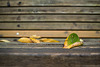 Fallen leaves on the bench