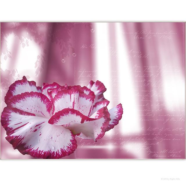 beautiful carnation ☼¸¸.•*☆