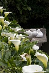 Flower, Flower, Duck, Duck