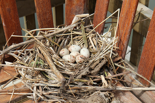 Moorhen nest at the boathouse