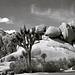 Joshua and the Jumbo Rocks