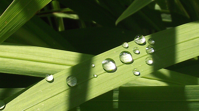 Some raindrops on the leaves