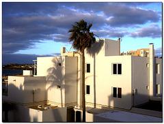 Palme im Morgenlicht