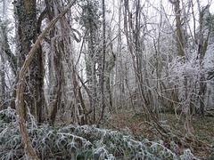 Hiver dans le bois