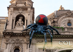 Mordu par cette veuve noire , j'ai essayé mon super-pouvoir en grimpant sur une chaise , résultat le nez  en compote . Spider-Man est un imposteur !!!