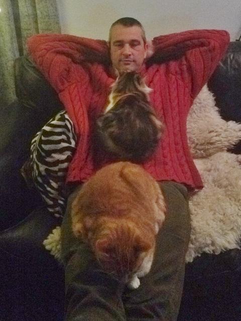 Two Cat Night
