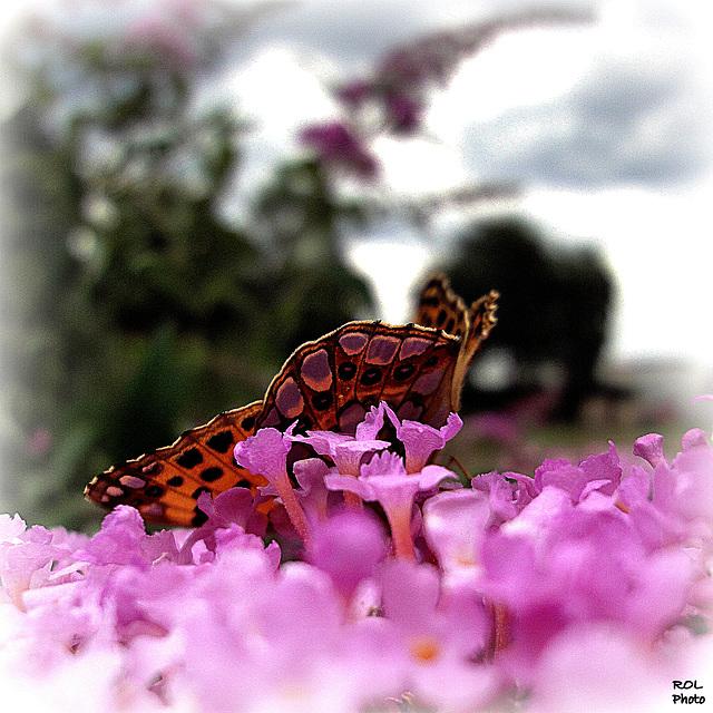 Nature ART...