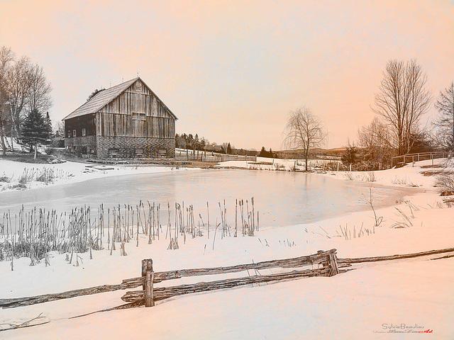 Nacre d'hiver IMG113253