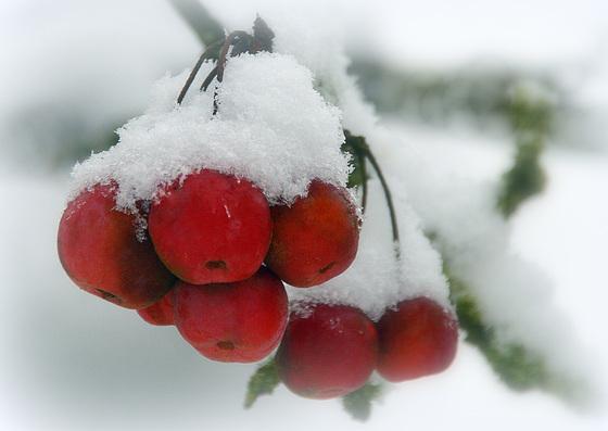 Le dernier sursaut de l'hiver .....avant le printemps ! /The last gasp of winter... before Spring!