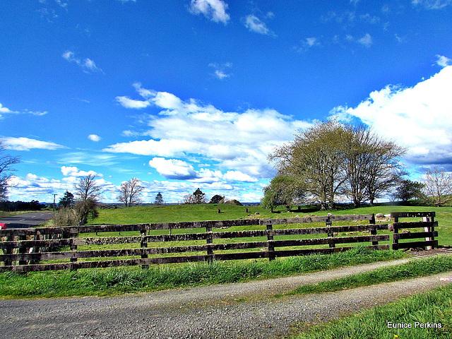 Rural Fence.