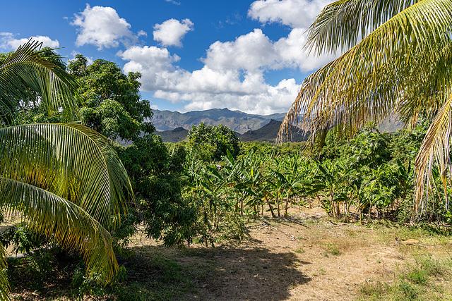 palms, bananas and mountains