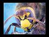 Hornet Portrait