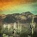 desert mountain dreaming