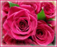 Des Roses pour vous et bon Mercredi !