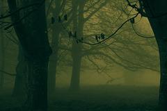 Voodoo Forest