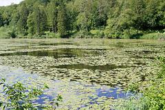 étang près de l'abbaye du val des choues
