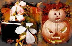"""October """"Spring"""" in New York"""