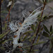 Lost feather