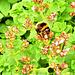 Bee On a Bush
