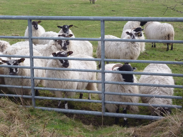 oad - why are ewe waiting ?